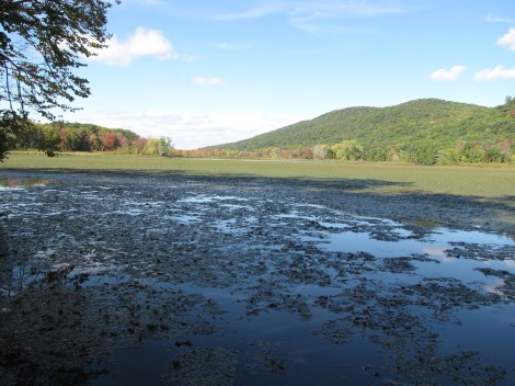 The eastern reaches of Woods Pond.