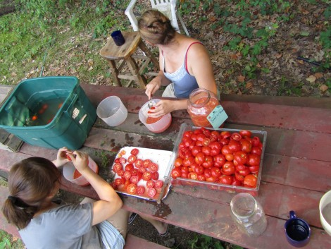 Squeezing seeds from tomatoes at Turtle Tree Seed.