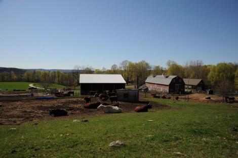 The Leahey Farm. Courtesy of Berkshire Grown.