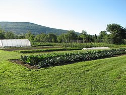 Woven Roots Farm in Tyringham: An innovative CSA