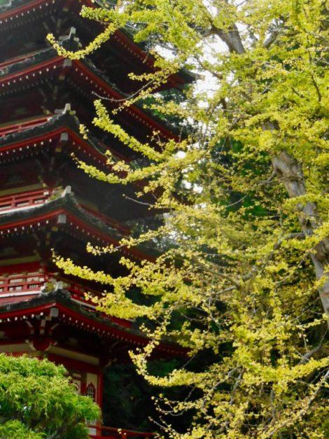 NATURE'S TURN: Japanese Tea Garden – natural materials, native ingenuity