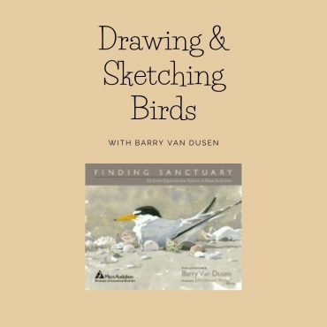 Drawing and Sketching Birds