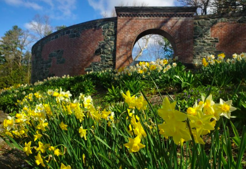 Daffodil and Tulip Festival