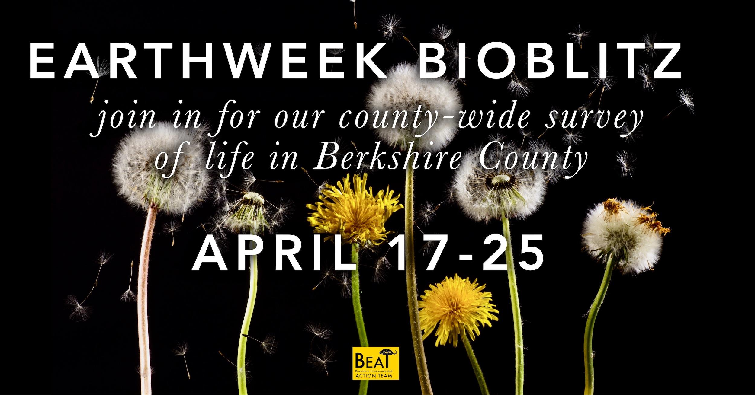DIY Earth Week Berkshire BioBlitz