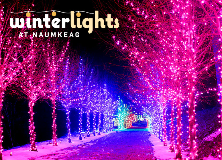 Winterlights at Naumkeag